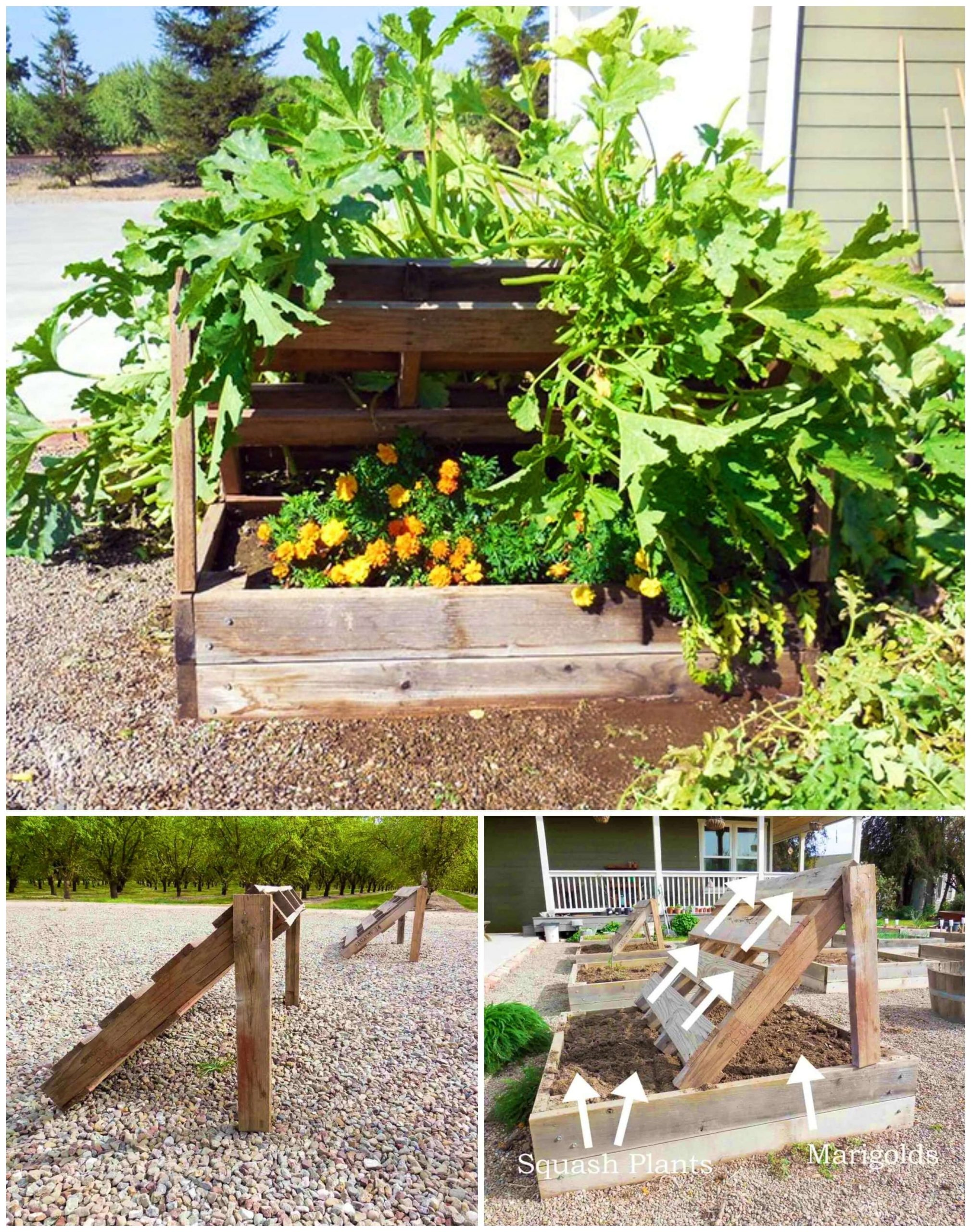 DIY Squash Growing Racks Out Of Pallets