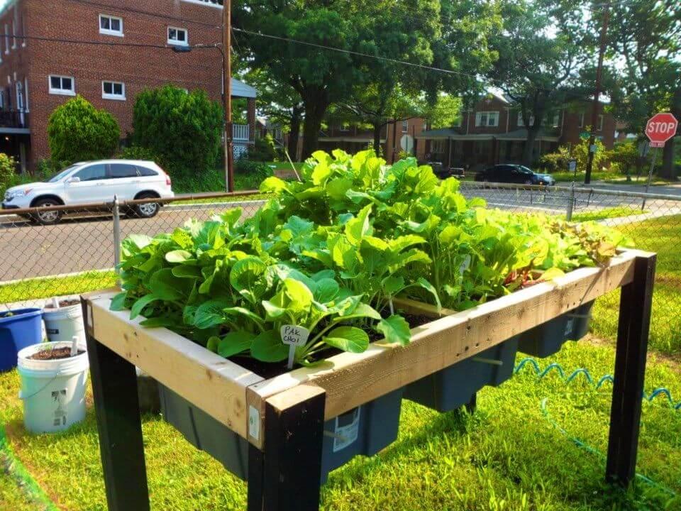 Easy DIY Self Watering Veggie Table