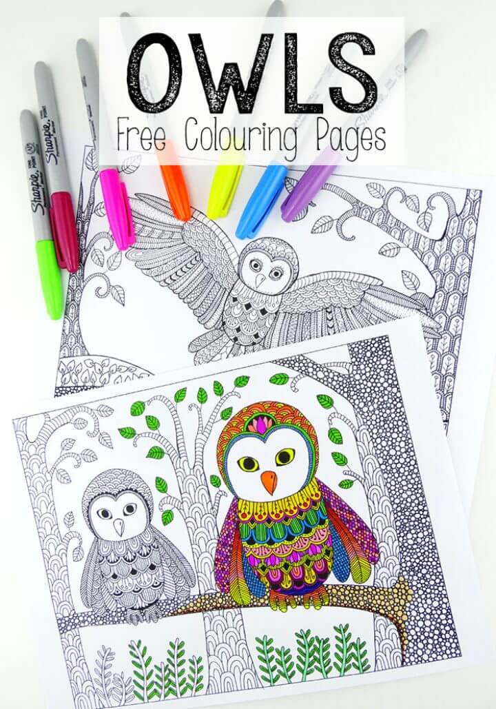 Being Up With The Owls Colouring Pages