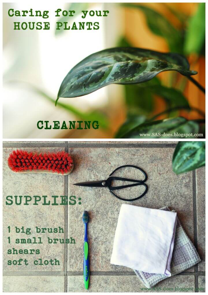 Cleaning House Plants