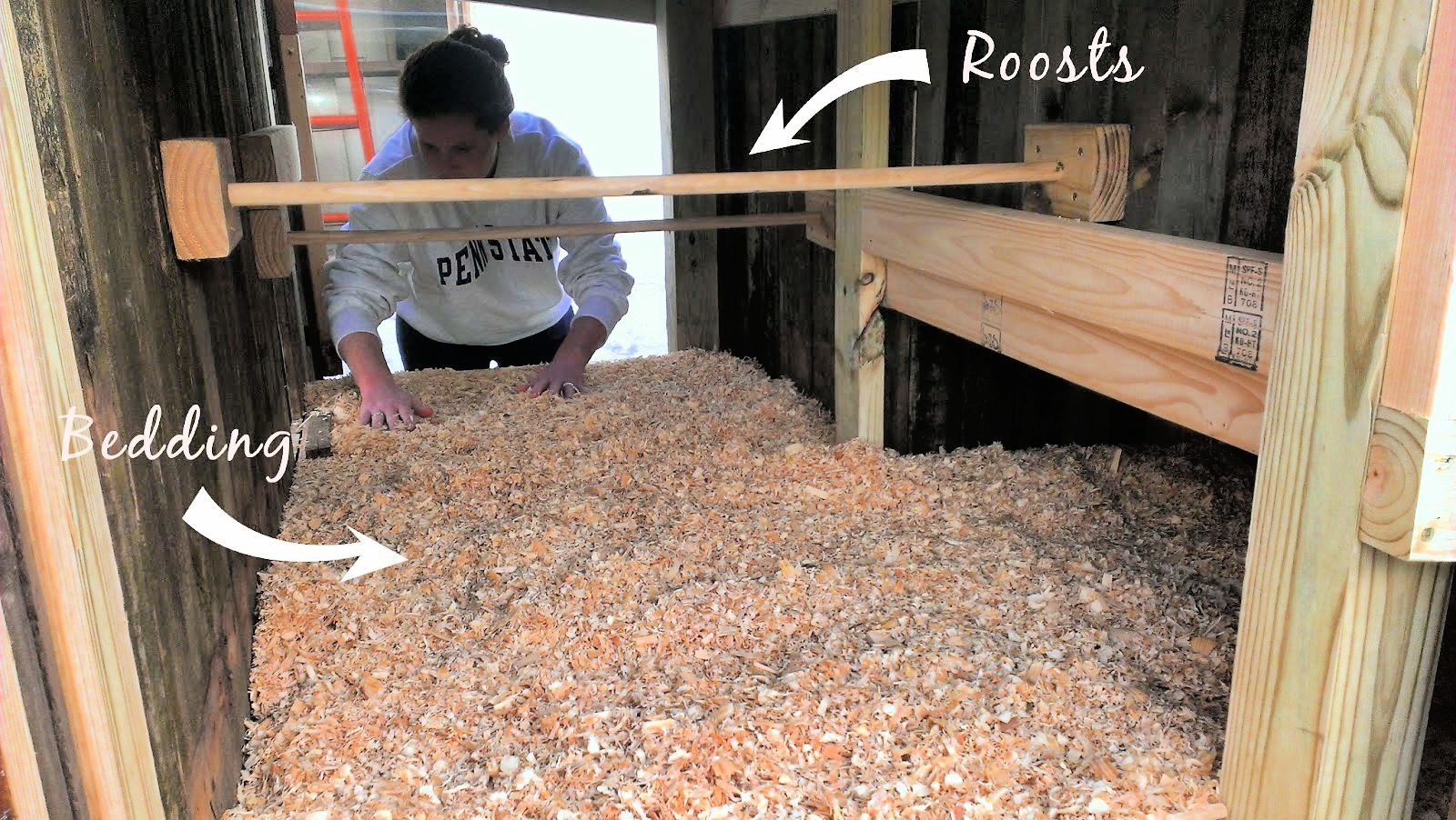 two roosts for sleeping and luxurious pine shavings for bedding